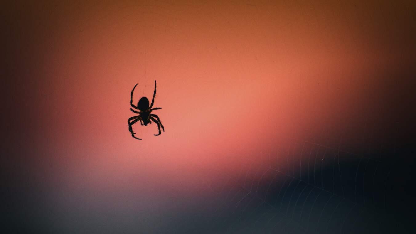 Uma aranha descendo em uma teia