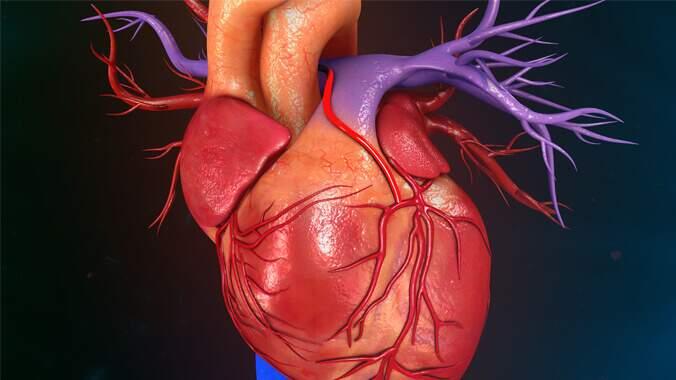 O desenho de um coração humano
